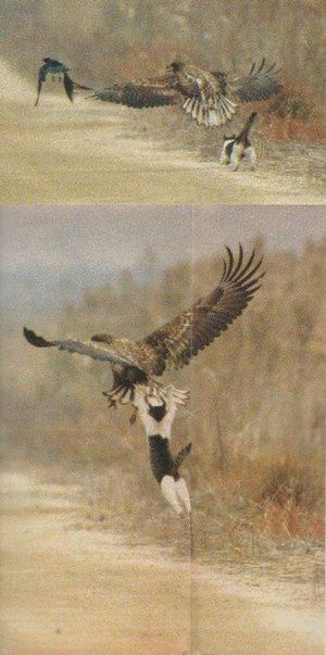 どうやったら、この勇気とジャンプ力が身に付くのか・・・・